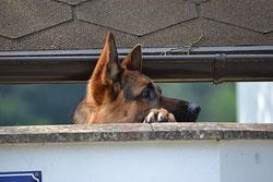 Détection de chien errant