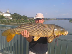 Johann Pröll, 10.08.2013, 92 cm (Donau)