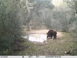 Con buenas cámaras, hasta distancias de 12-15m veremos la boca del animal pero sin gran detalle