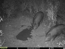 Las fotos en blanco y negro es más probable que aparezcan borrosas si el animal está en movimiento