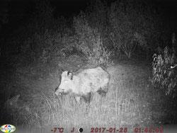 """El infrarrojo puede """"quemar"""" la foto si el animal está muy cerca"""