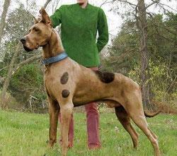 scooby doo et sammy filmrace chien dogue allemand