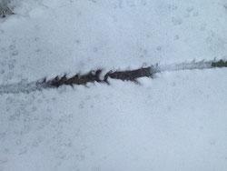雪の中の一本線をたどってみると