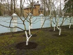 Профессиональная обрезка сада