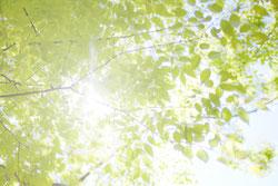 青空と新緑。木漏れ日。