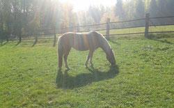 Freiheit im Außenbereich – die Pferde können ganz ihrer Natur folgen.