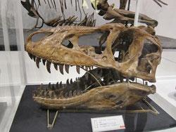 タルボサウルスの顔の骨