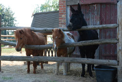 Ponyauslauf