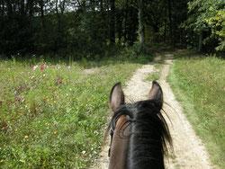équitation et ballade