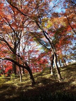 庭の斜面(国分寺崖線)に立つ木々