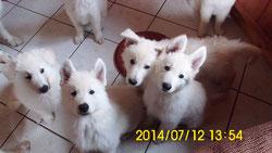 TomTom, Timo, Ami und Shari