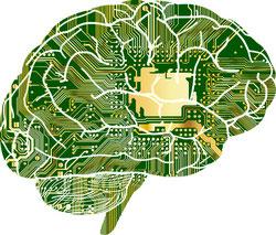 Gehirn mit unterschiedlichen Bereichen