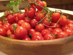 池田町のミニトマト