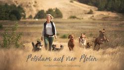 Kontakt Hundebetreuung, Hundesitter Potsdam Brandenburg