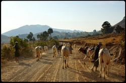 Reise ab Chiang Rai (Thailand) nach Myanmar zu den ethnischen Minderheiten im Shan Staat.