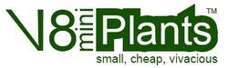 V8miniPlants, mini prennials, plug plants, trajnice