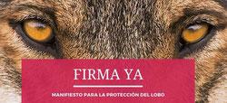 Manifest Protecció Llop