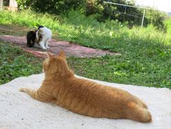果樹園のくつろぐネコたち