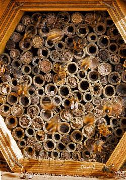Nisthilfen Insektennisthilfen Insektenhotel Pappröhrchen