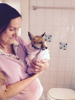 süßer Fuchswelpe, 5 Wochen alt, mit Benita Koepff