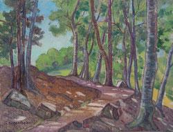 Waldweg am Rugen