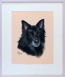 Nr. 2794 Schäferhund Portrait
