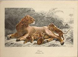 Nr. 3355 Löwin mit Jungen