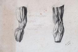 Nr. 3108  Kniemuskulatur