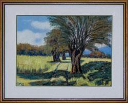 Feldweg mit Olivenbäumen