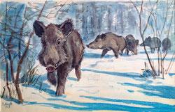 2930 Wildschweine im Winter