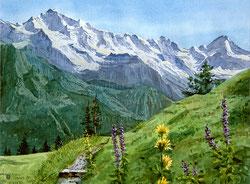 Nr. 1141 Jungfrau, Printemps dans les Alpes