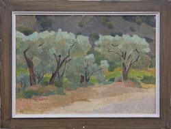 Nr.1035  Alte Olivenbäume