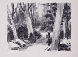 Nr.228  Waldspaziergang