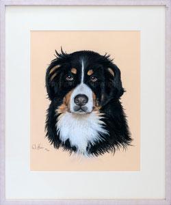 Nr. 2795 Sennenhund Portrait