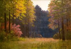 Nr. 1167  Waldlichtung
