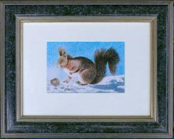 Nr.1980; Eichhörnchen im Winter