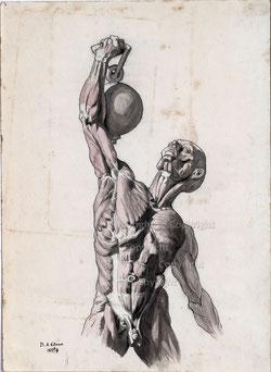 Nr. 3105 Anatomie Kunst