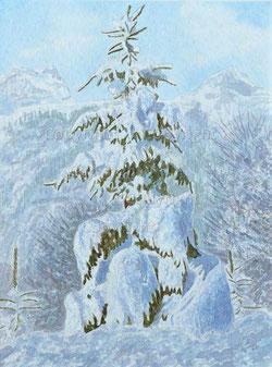 Nr.2040;  Winter Tanne