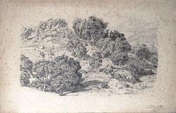 Nr. 3035 Waldlandschaft