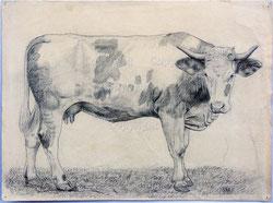 Nr.654 Simmentaler Kuh