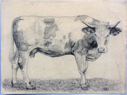 Simmentaler Kuh