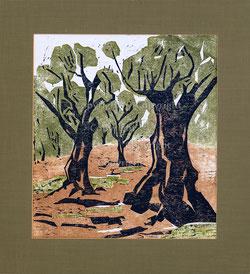 Nr. 2889 Olivenbäume
