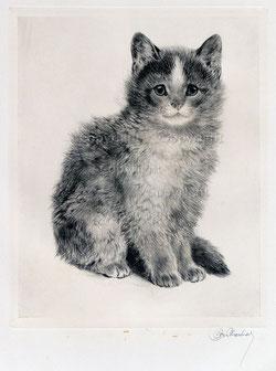 Nr.2705 junge Katze
