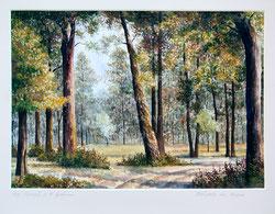 Nr. 1385 Waldpartie im Aargau