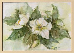Nr. 2577 Kirschblüten