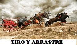 """El tiro y arrastre """"Tir i arrossegament"""" es un deporte muy extendido en la Comunidad Valenciana, en donde se utilizan caballos, carros y sacos llenos de arena."""