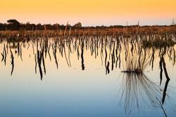 Moor Landschaften