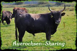 Auerochsen-Sharing | Mein BioRind