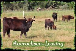 Auerochsen-Leasing | Mein BioRind