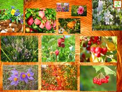 Комплексный уход за вашим садом
